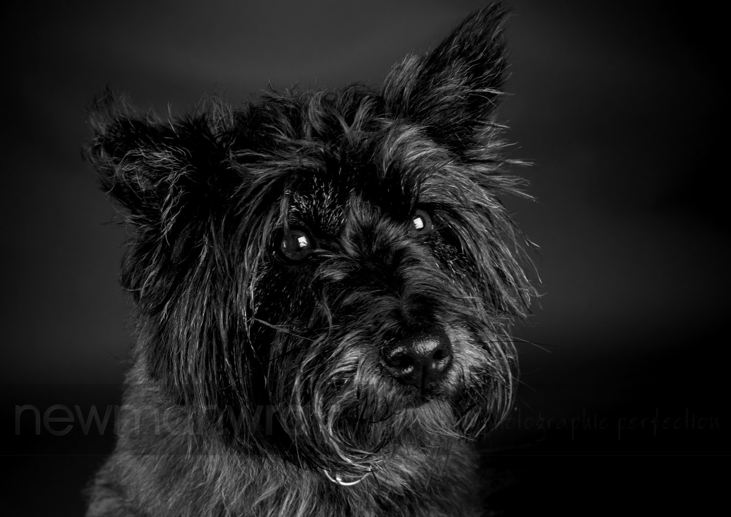 pet_portrait_photographs-104