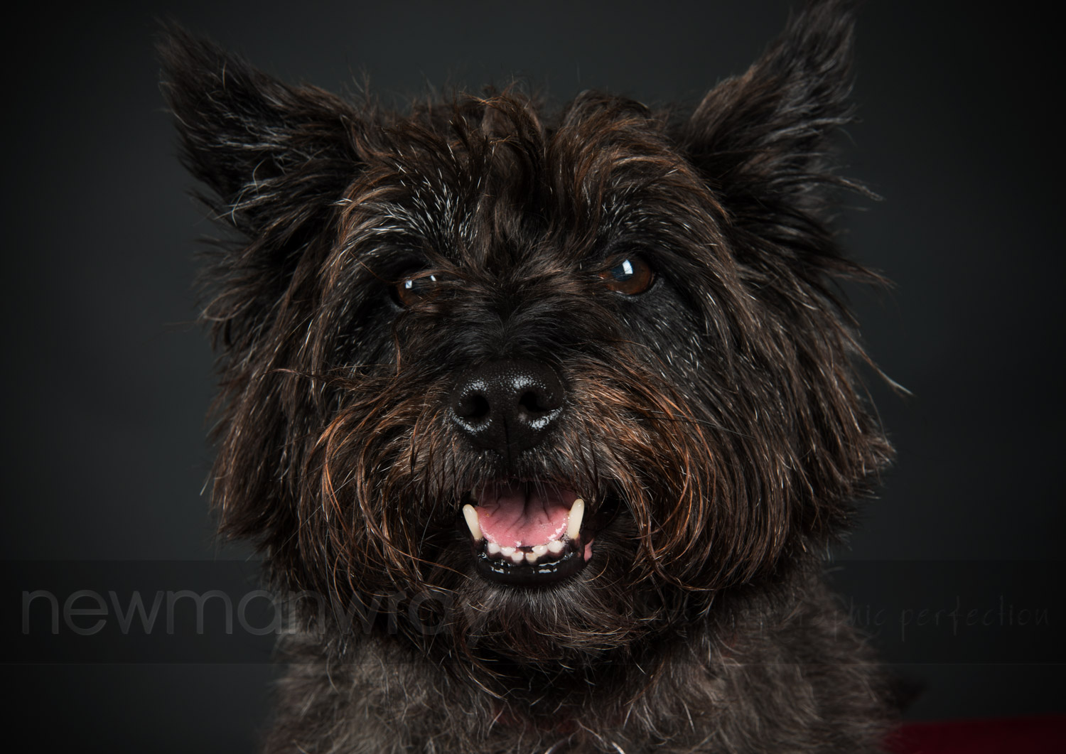 pet_portrait_photographs-105