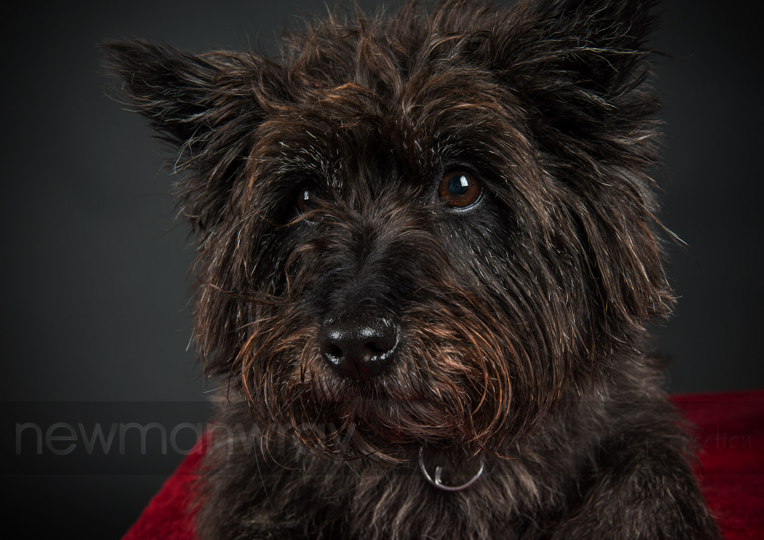 pet_portrait_photographs-106