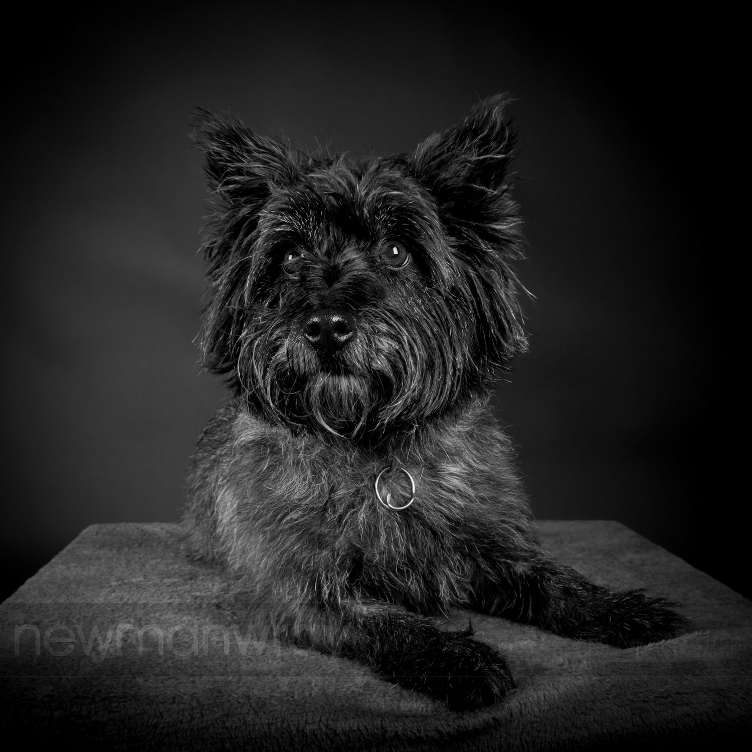 pet_portrait_photographs-108
