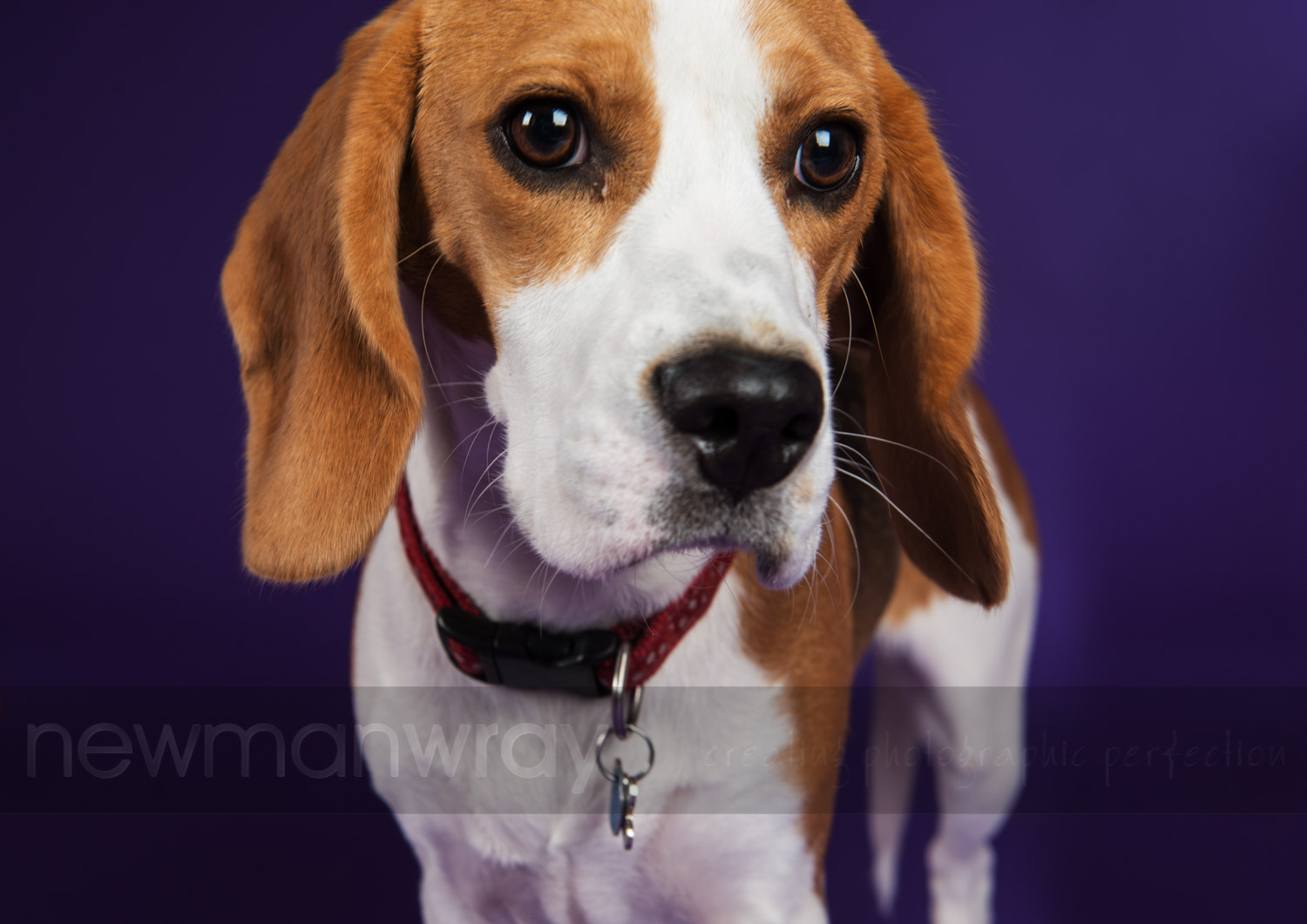 pet_portrait_photographs-116