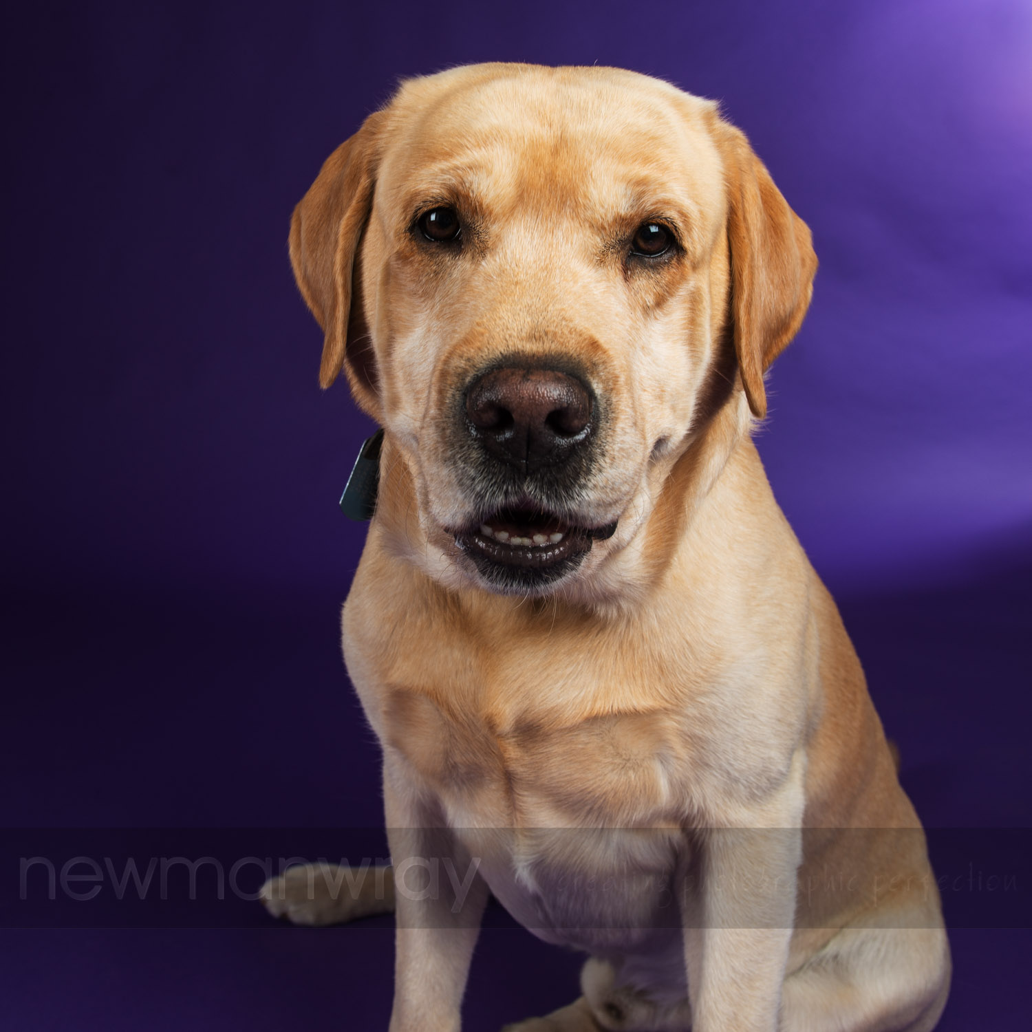 pet_portrait_photographs-16