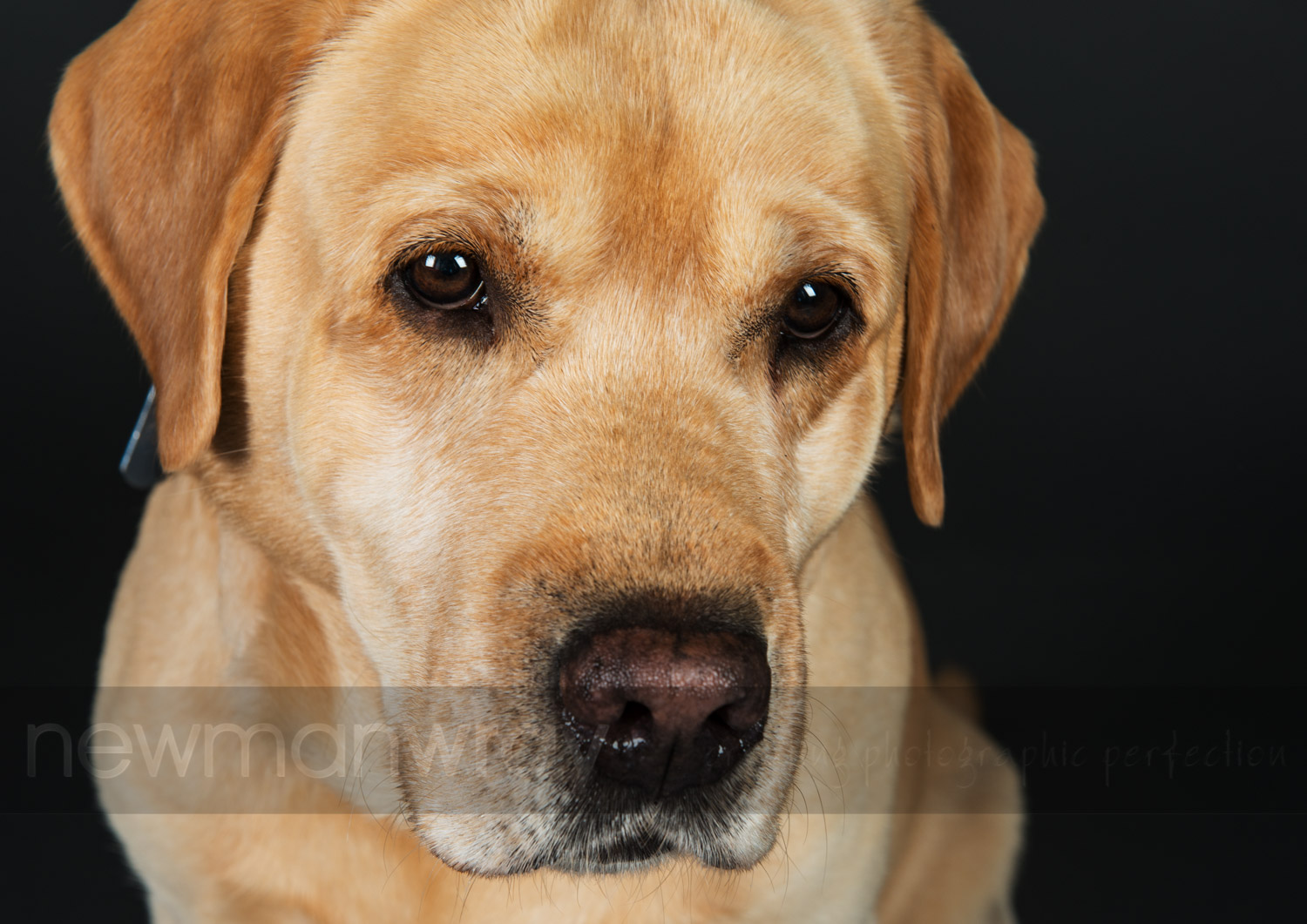pet_portrait_photographs-21