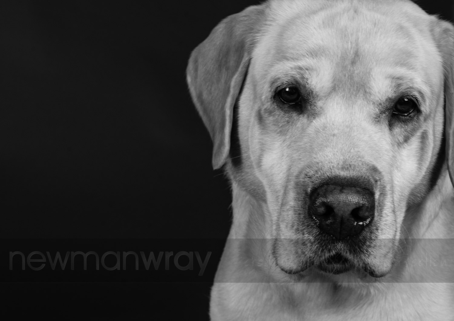 pet_portrait_photographs-25