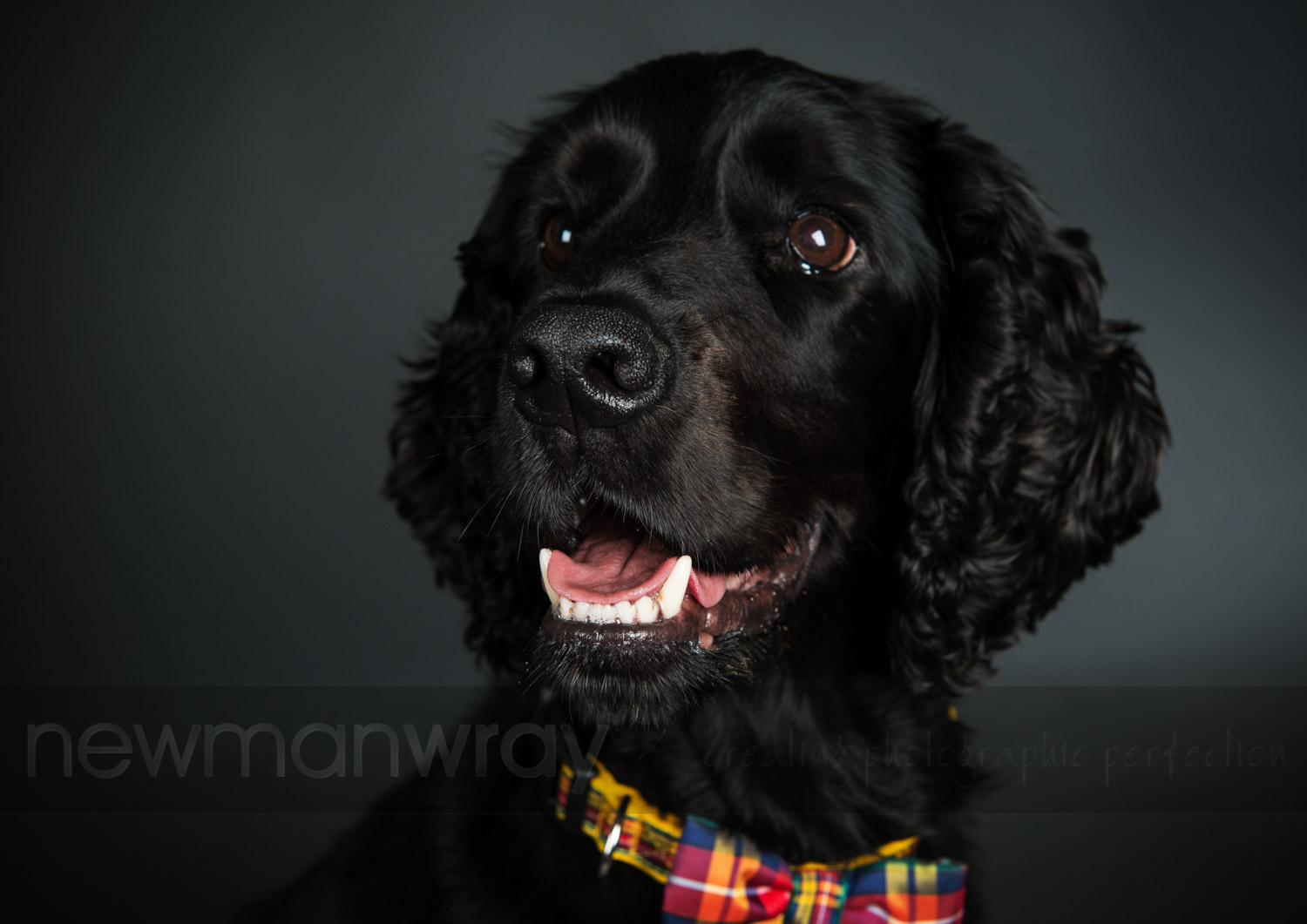 pet_portrait_photographs-41