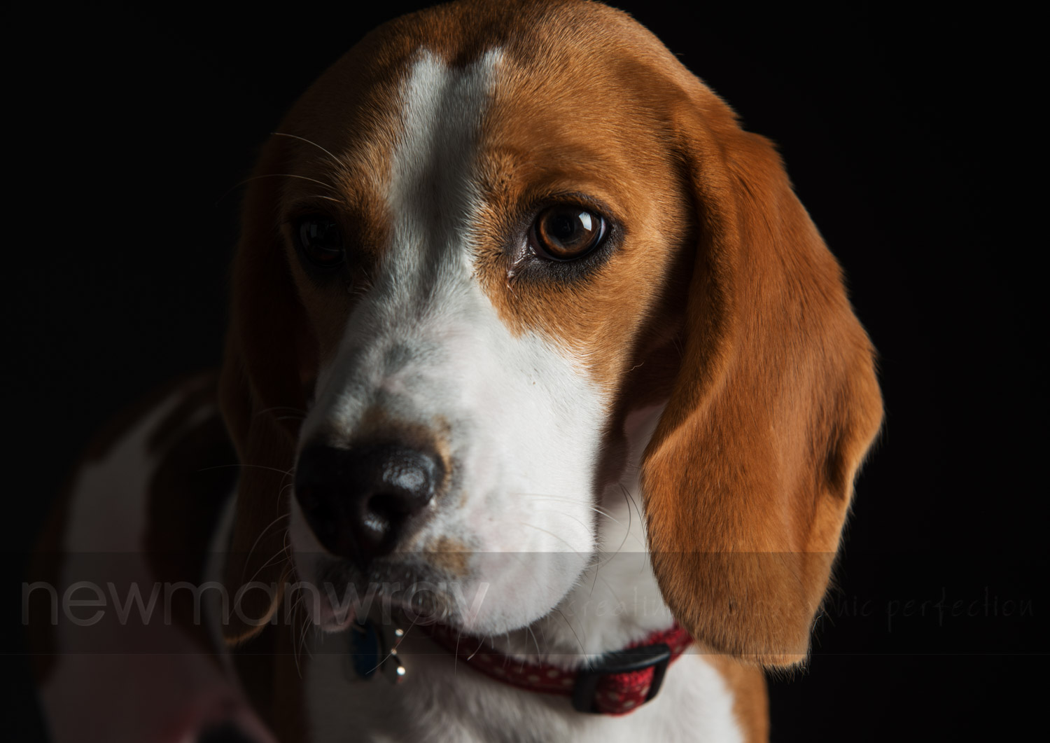 pet_portrait_photographs-53