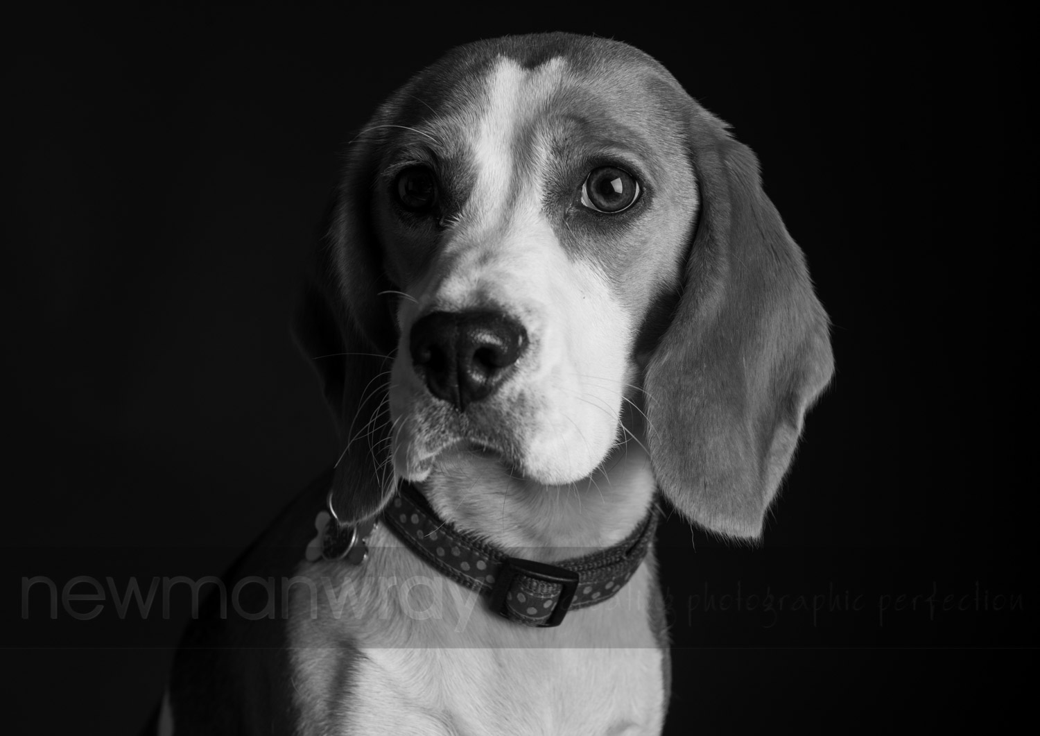 pet_portrait_photographs-56