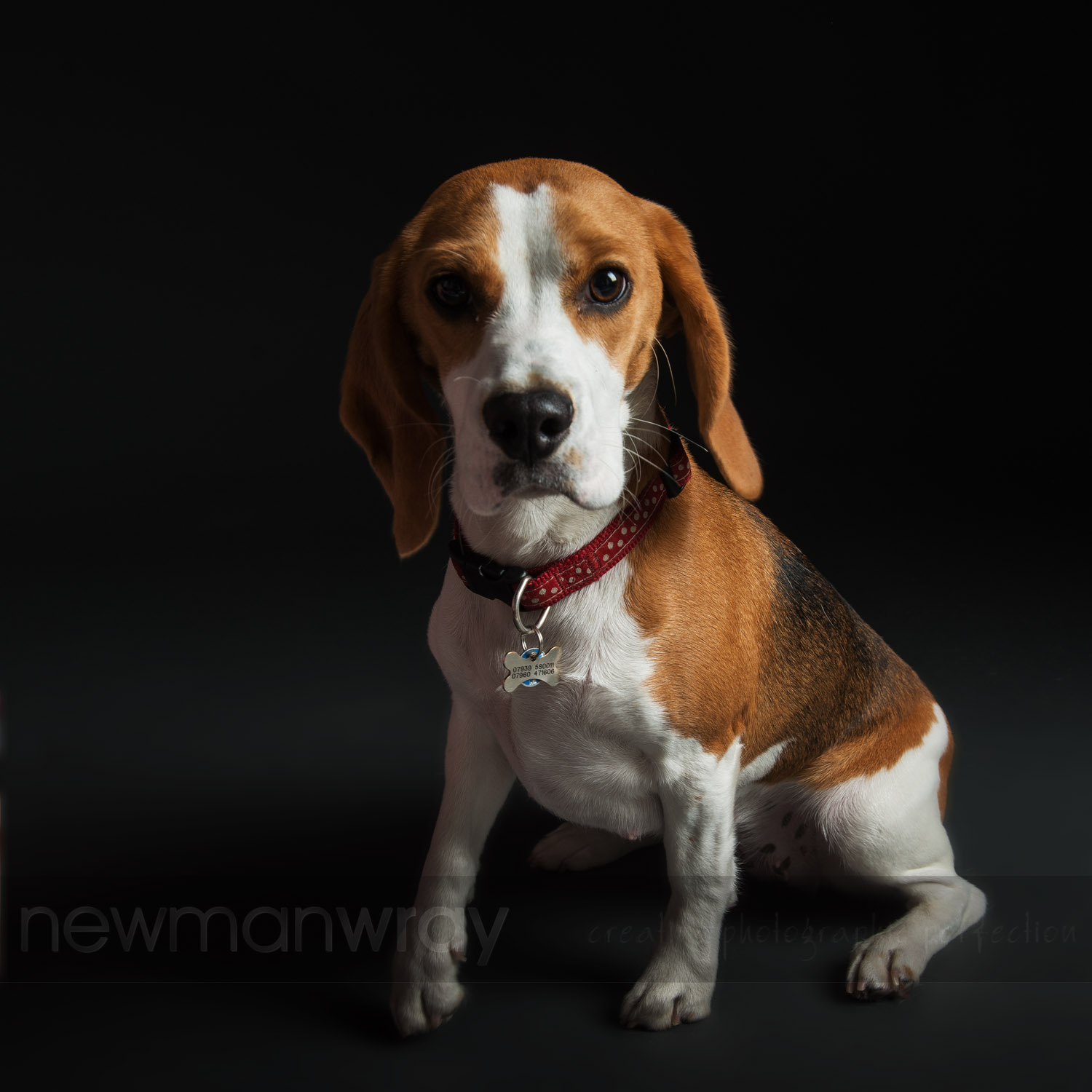 pet_portrait_photographs-80