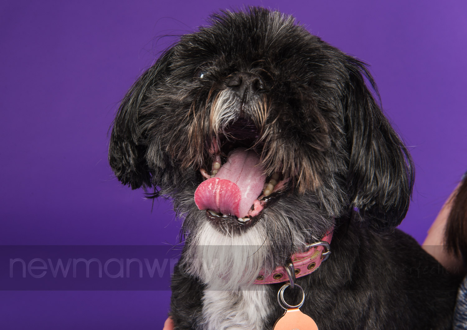 pet_portrait_photographs-87