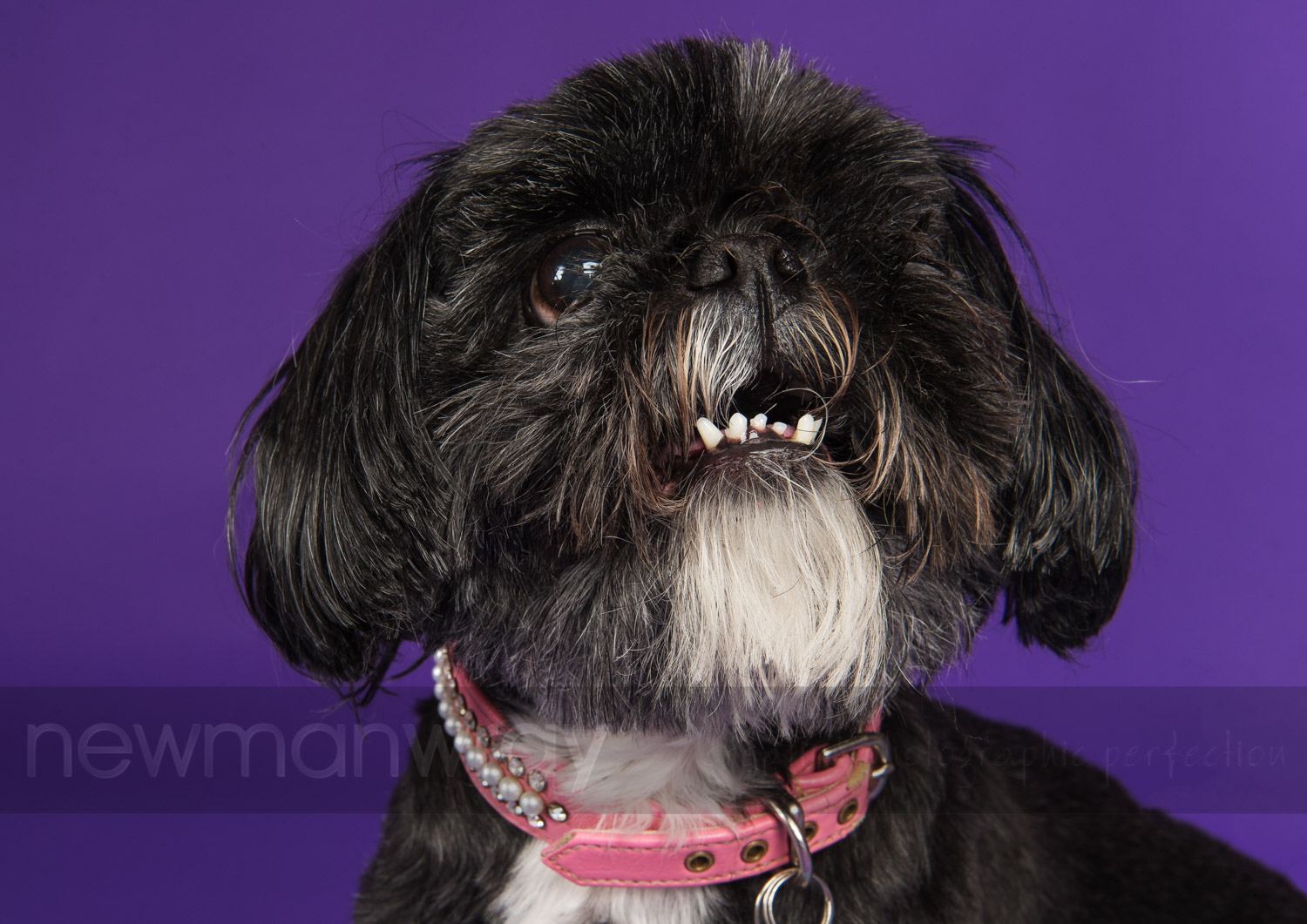 pet_portrait_photographs-88