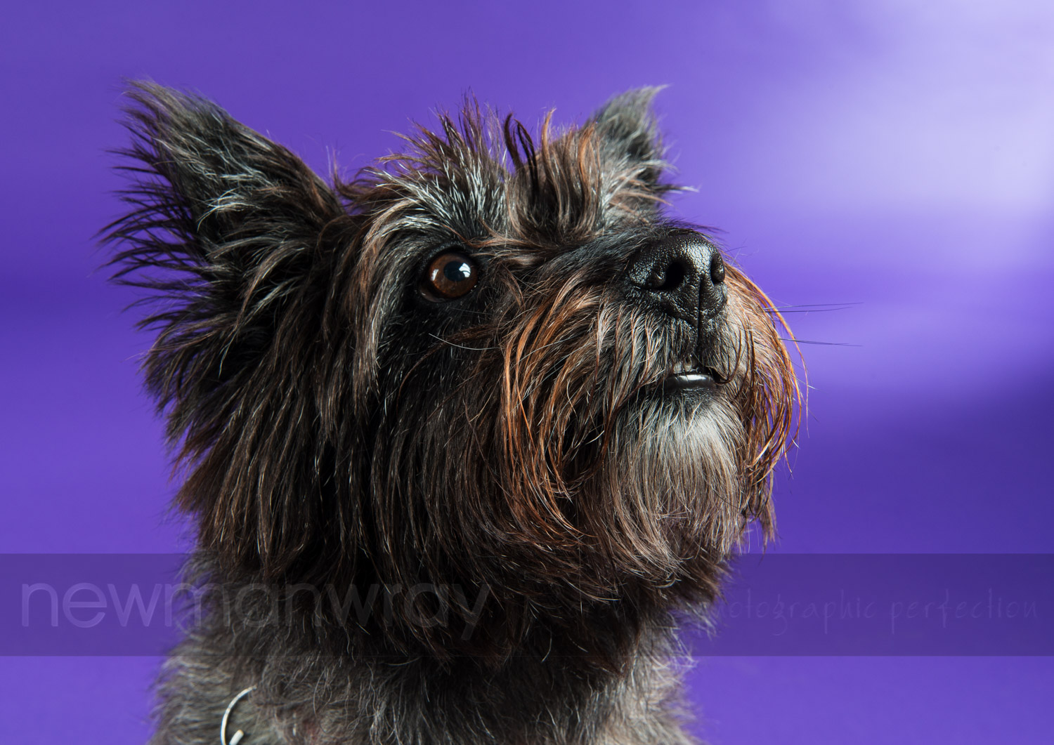 pet_portrait_photographs-98