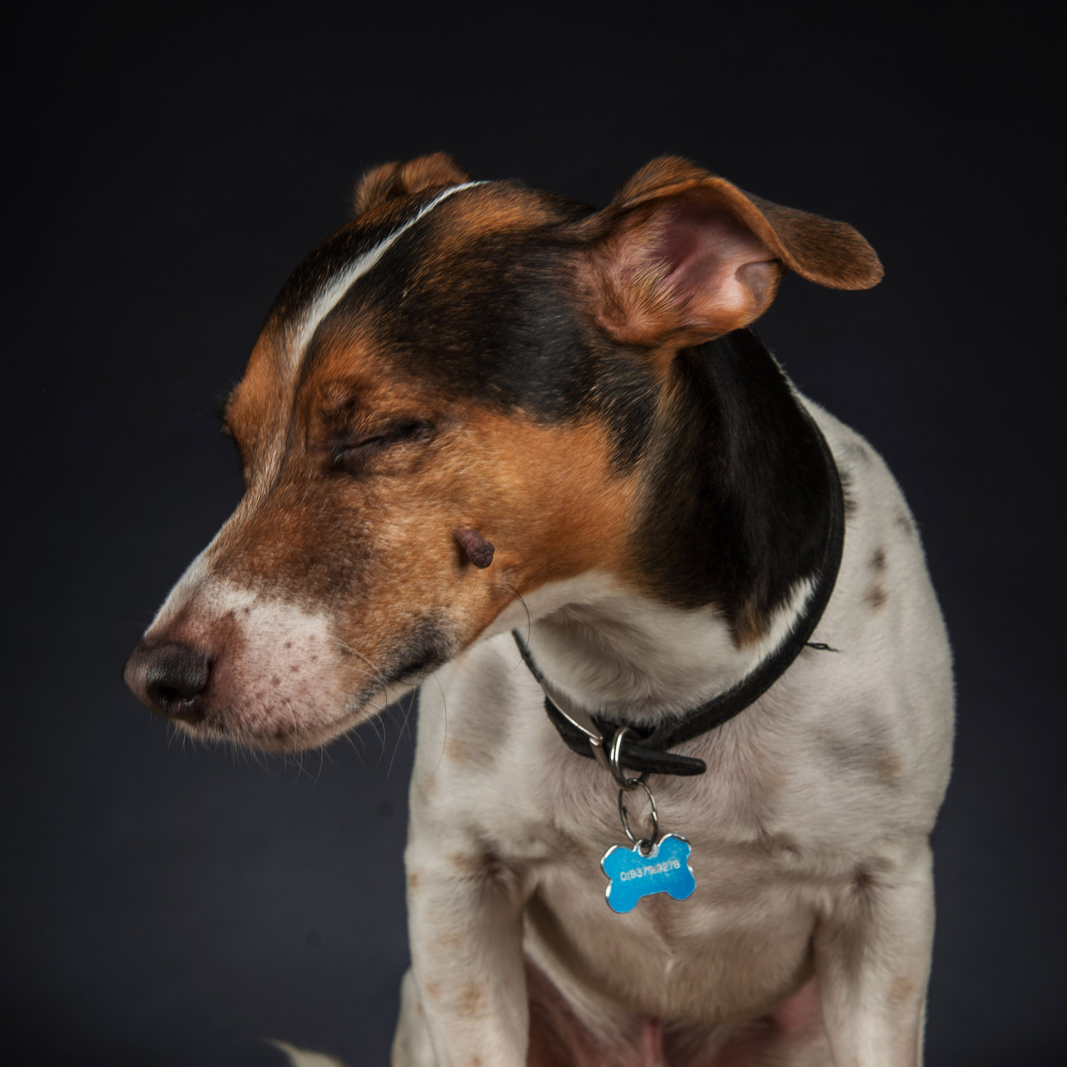 pet_portrait_photography_2016_007