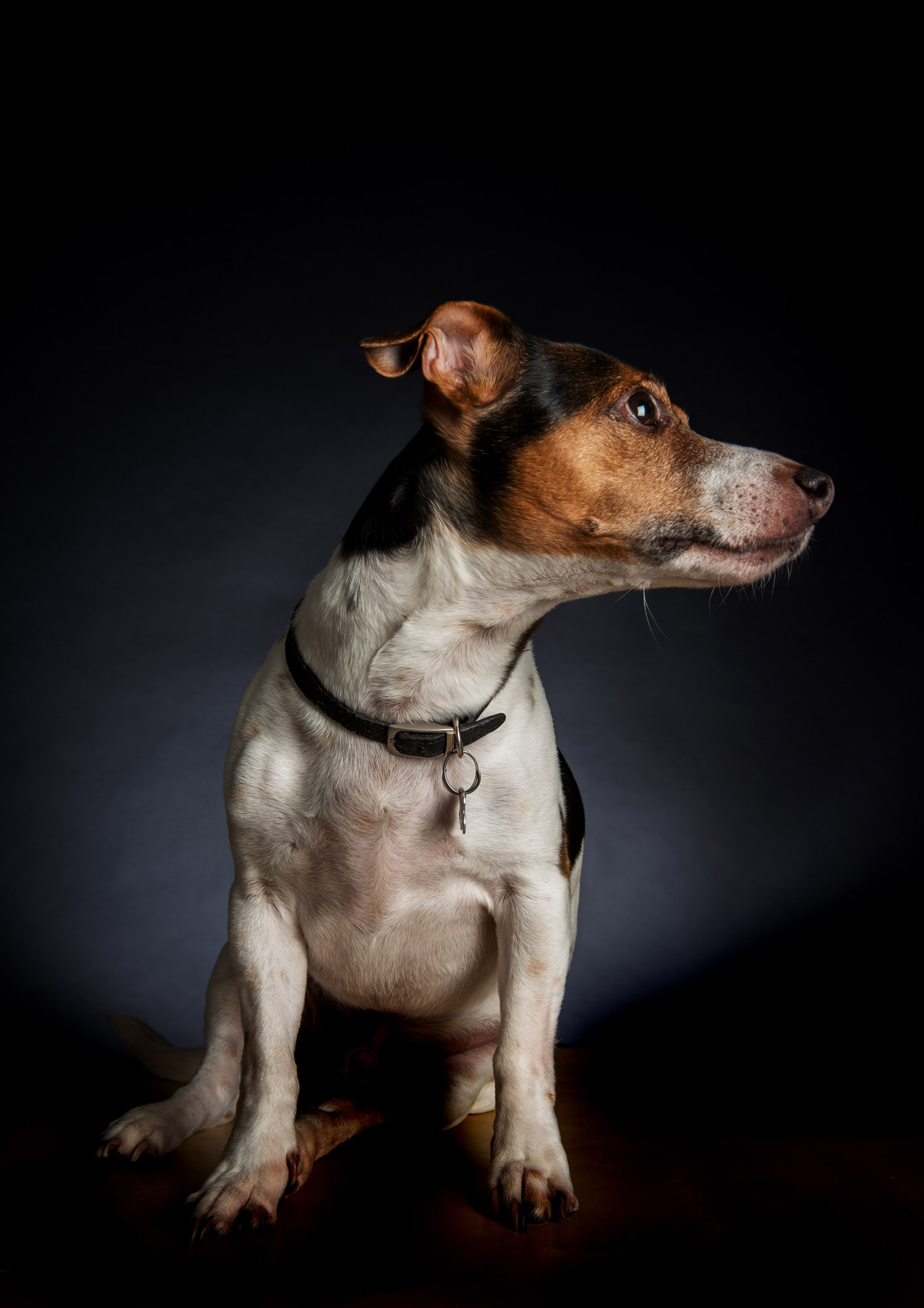 pet_portrait_photography_2016_016