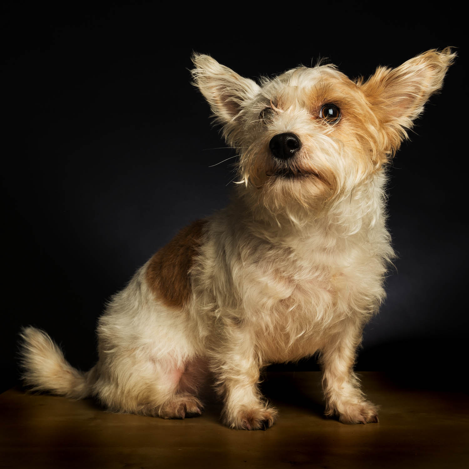 pet_portrait_photography_2016_026