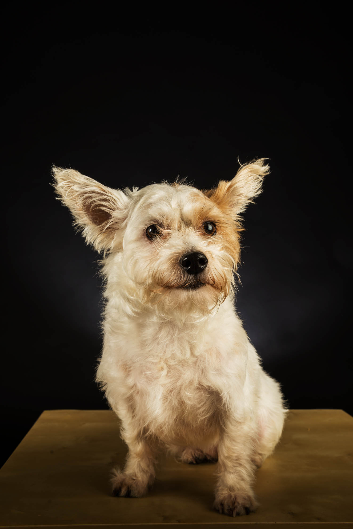 pet_portrait_photography_2016_028