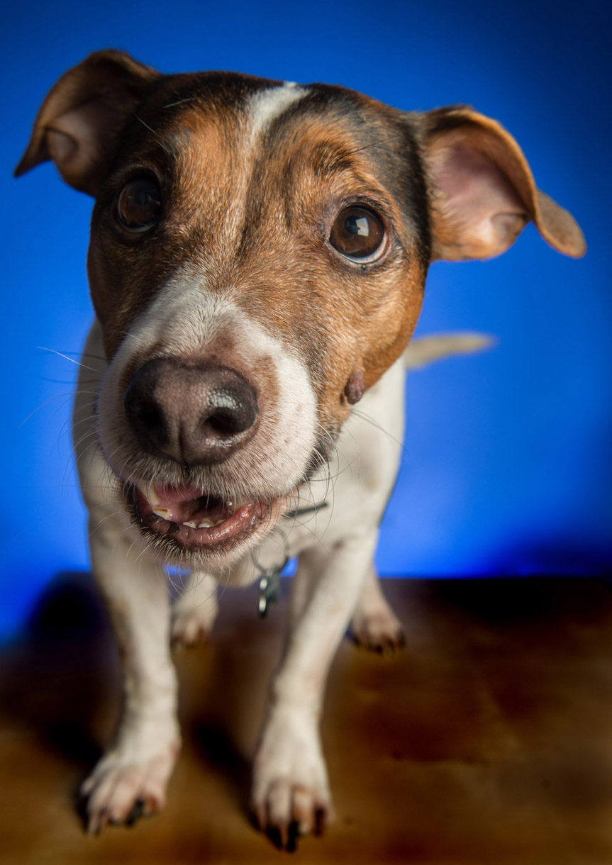 pet_portrait_photography_2016_059