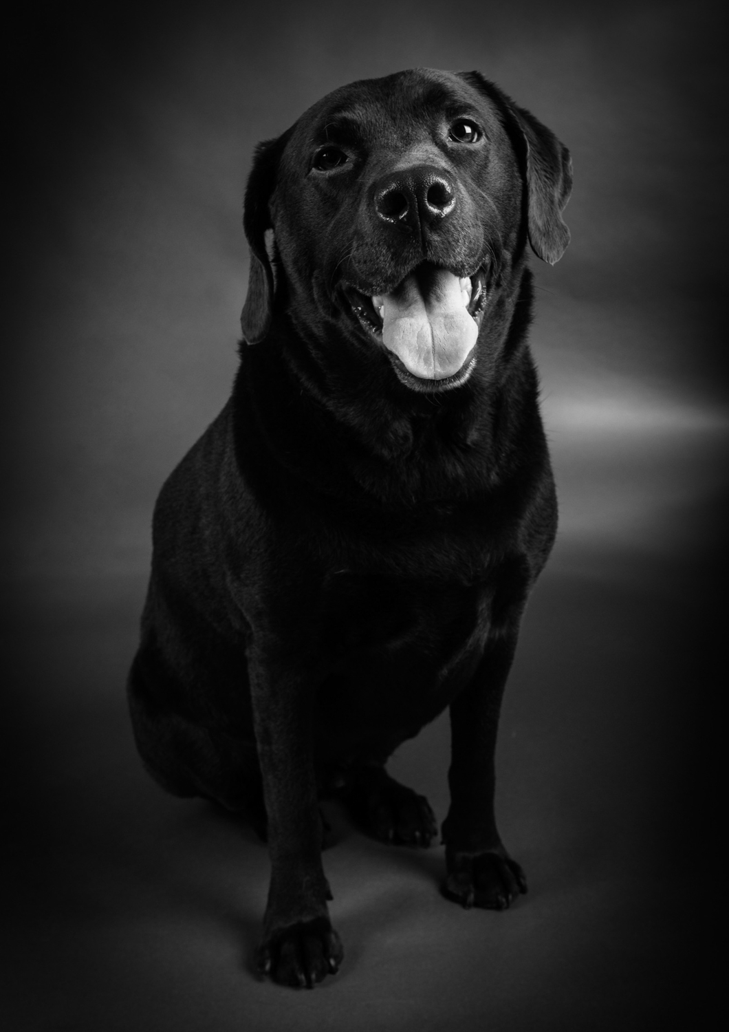 pet-portrait-19-55