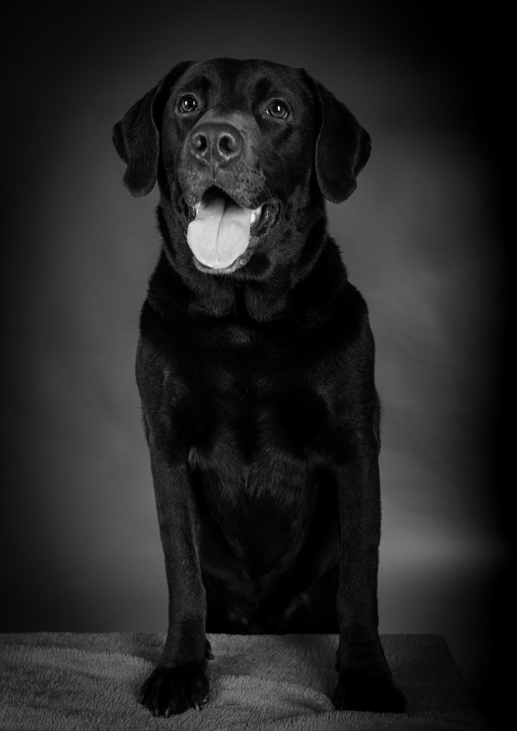 pet-portrait-19-89