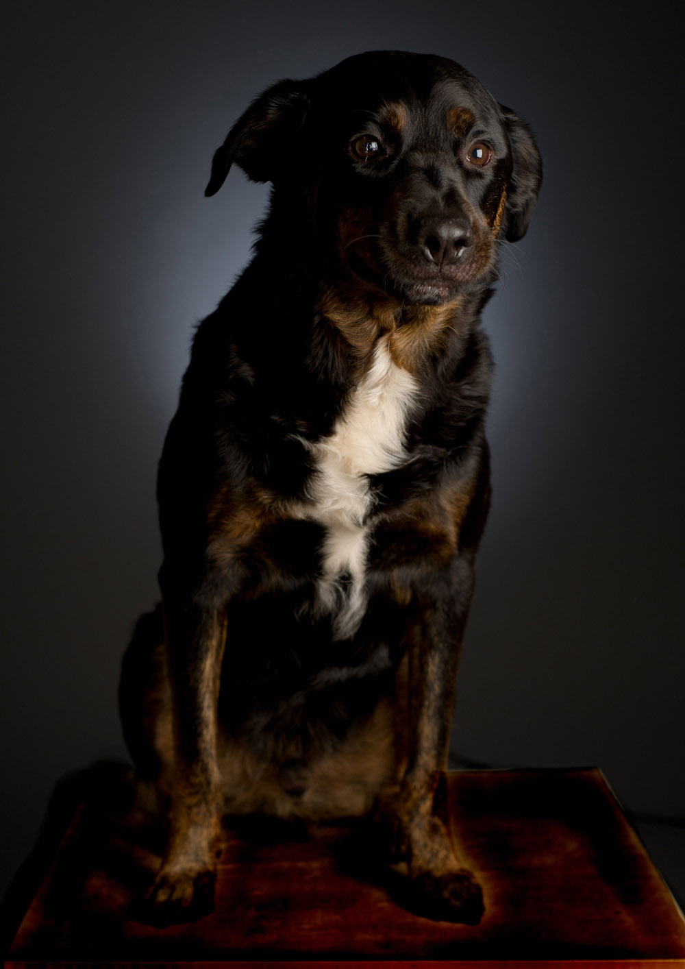 pet_portrait_photography_007