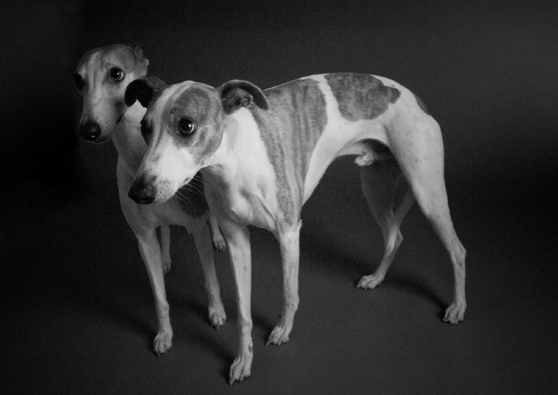 studio_pet_portrait_014