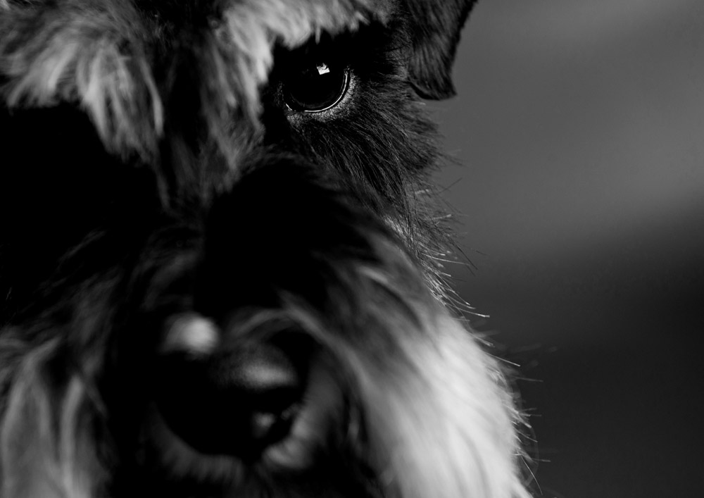 Pet Portrait Photography Day – 2014 Highlights