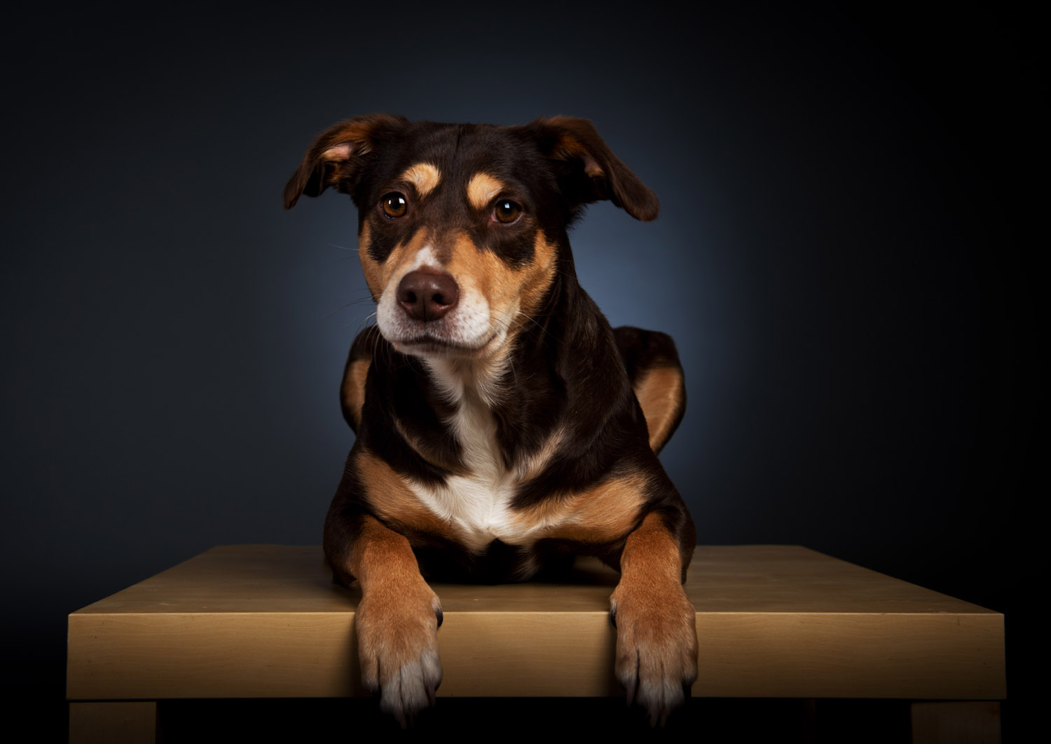 Pet Portrait Photography Day 25th of November 2015