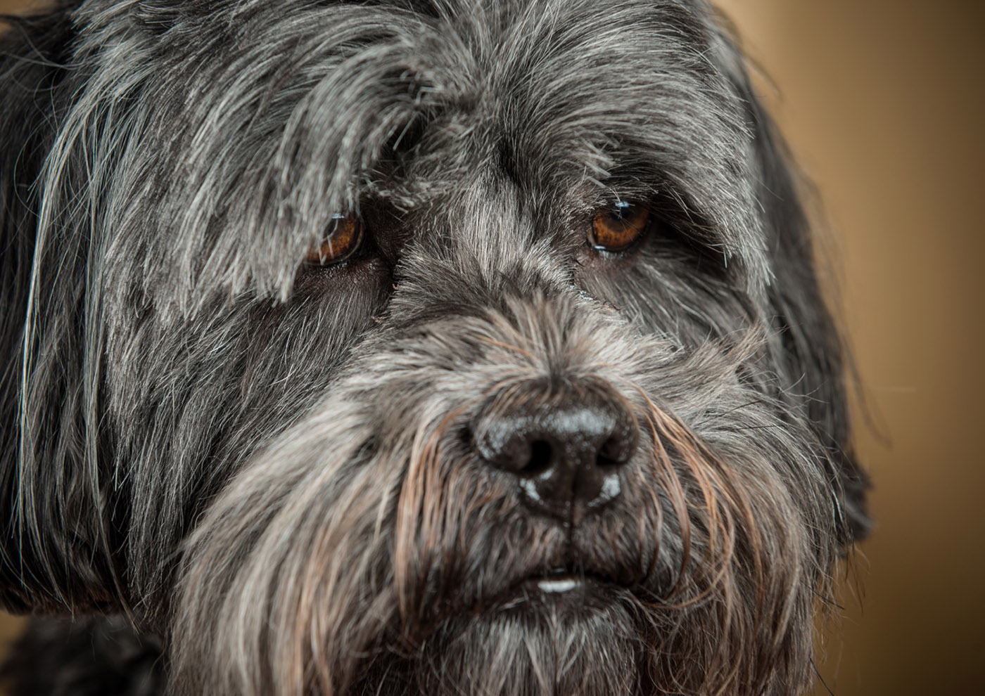 Dog Portrait Day 30th of May 2018